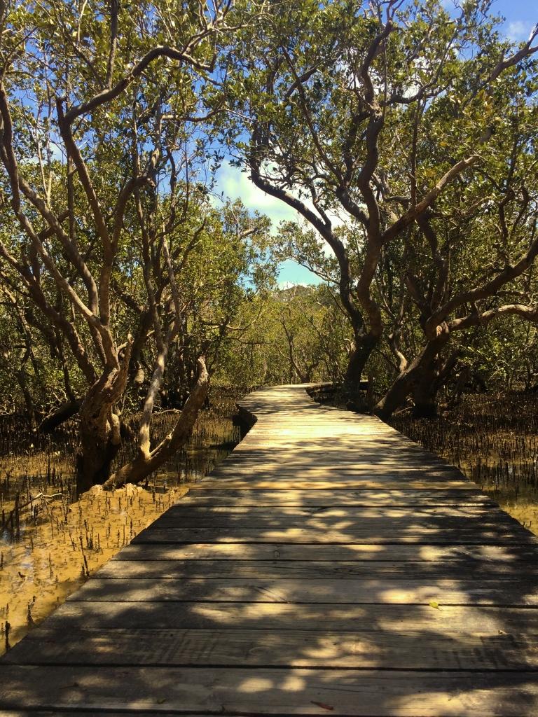 mangrove-walk