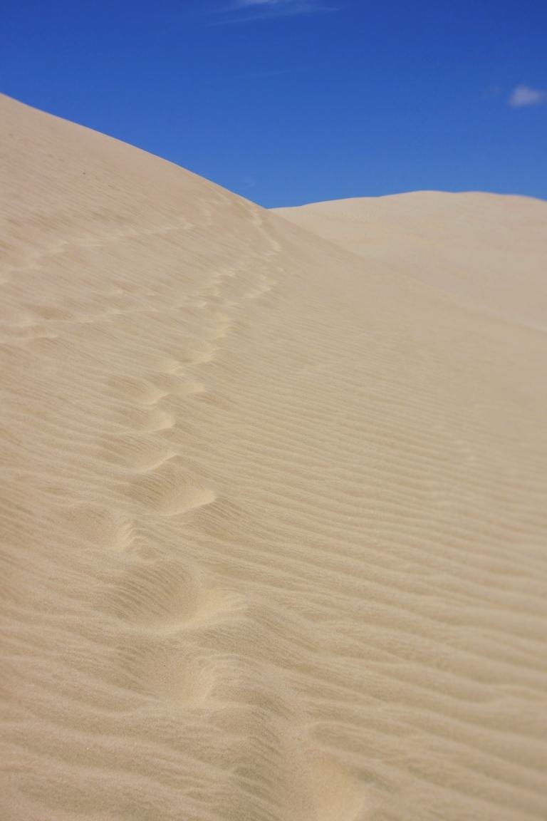 sand-dune-prints